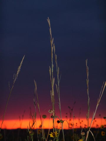 S3Weed_Sunset